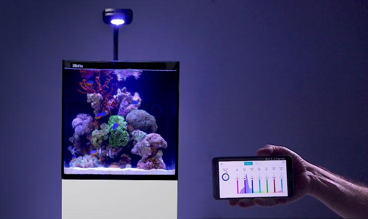 Le Nouveau Red Sea Max 174 Nano Zoanthus Fr
